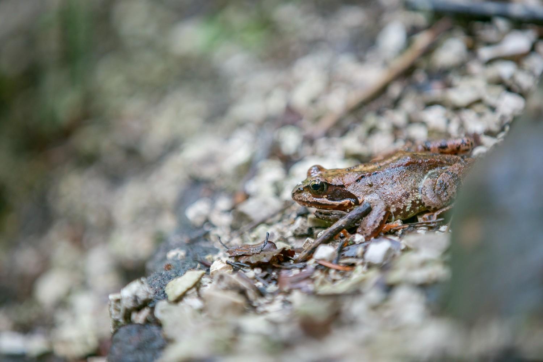 Frosch am Plötz