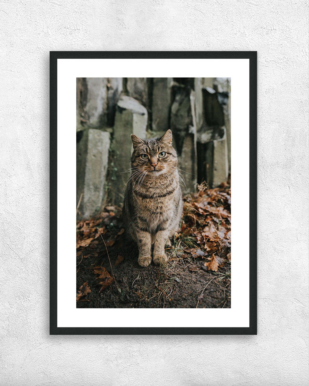 El-gato-NZUP-017-00