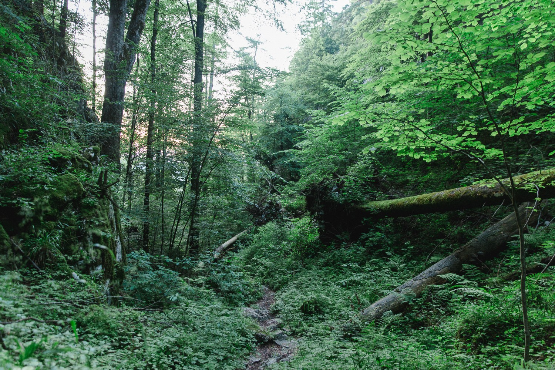 Kleiner Barmstein Wanderweg